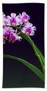 Flowers - Aerides Lawrenciae X Odorata Orchid Beach Towel