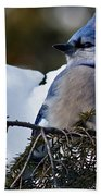 Fluffy Blue Jay Beach Towel