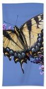 Fluted Swallowtail Beach Towel