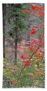 Forest Autumn Beach Towel