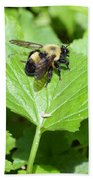 Forest Bee 7260 Beach Towel