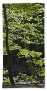 Forest Cathedral Beach Towel