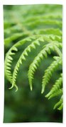 Forest Fern Beach Towel