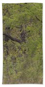 Forest Glimpse Beach Towel