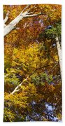 Forest In Autumn Bavaria Beach Towel