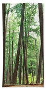 Forest In Early Morning, Wetlands Beach Towel