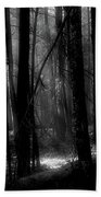 Forest Light In Black And White Beach Towel