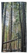 Forest Morning Beach Towel