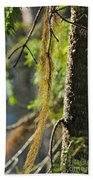 Forest Moss Beach Towel