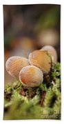 Forest Mushrooms Beach Towel