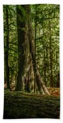 Forest Of Cathedral Grove Collection 1 Beach Towel