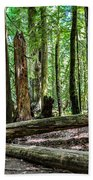 Forest Of Cathedral Grove Collection 2 Beach Towel
