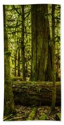 Forest Of Cathedral Grove Collection 3 Beach Towel