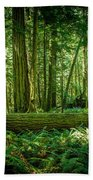 Forest Of Cathedral Grove Collection 7 Beach Towel