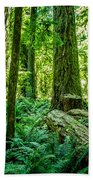 Forest Of Cathedral Grove Collection 8 Beach Towel