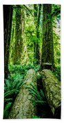 Forest Of Cathedral Grove Collection 9 Beach Towel