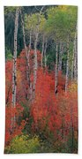 Forest Of Color Beach Towel