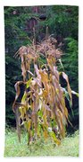 Forgotten Corn Stalks Beach Towel