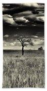 Forgotten Tree Beach Sheet
