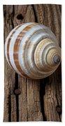 Found Sea Shell Beach Towel by Garry Gay