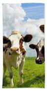 Four Chatting Cows Beach Towel