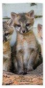 Four Fox Kits Beach Towel
