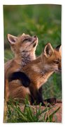 Fox Cub Buddies Beach Towel by William Jobes