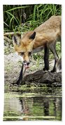 Fox Drink Beach Towel