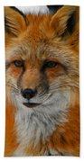 Fox Gaze Beach Towel