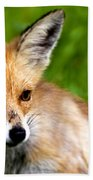 Fox Pup Beach Towel by Fabrizio Troiani