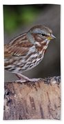 Fox Sparrow Pictures 16 Beach Towel
