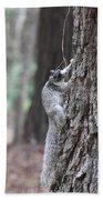 Fox Squirrel Vertical Beach Towel