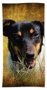 Fox Terrier Dog Beach Towel