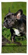French Bulldogs Beach Towel by Heike Hultsch