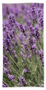 French Lavender Beach Towel