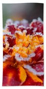 French Marigold Named Durango Red Outlined With Frost Beach Towel