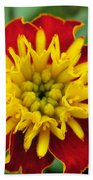 French Marigold Named Solan Beach Towel