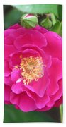 French Rose Beach Towel