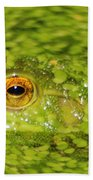 Frog In Single Celled Algae Beach Towel
