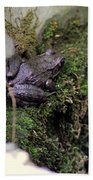 Frog On Moss On Wall Beach Towel