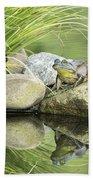 Bull Frog On A Rock Beach Towel