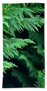 Fronds Of The Leyland Cypress Beach Towel