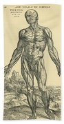 Front Of Male Human Body.anatomical Beach Towel