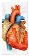 Front View Of Human Heart Beach Towel by Stocktrek Images