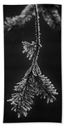 Frosted Pine Branch Beach Towel