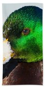 Mallard On Ice Beach Towel