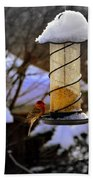 Frozen Feeder And Disappointment Beach Towel