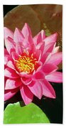 Fuchsia Pink Water Lilly Flower Floating In Pond Beach Towel