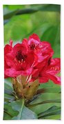 Fuchsia Rhododendron Moore State Park Beach Towel