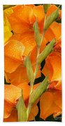 Full Stem Gladiolus Beach Towel